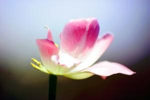 flower-1543013